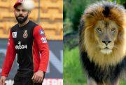 Virat Kohli and Lion.