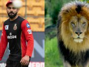 Virat Kohli and Lion.
