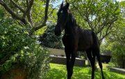 MS Dhoni's new horse